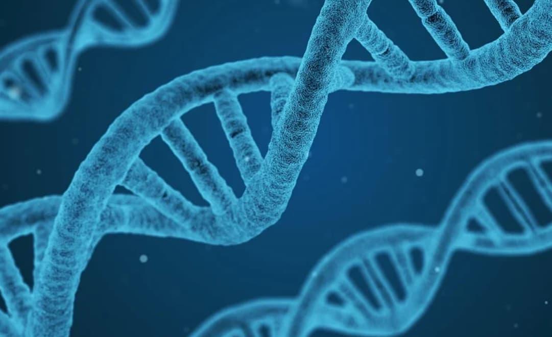 Génétique et adn